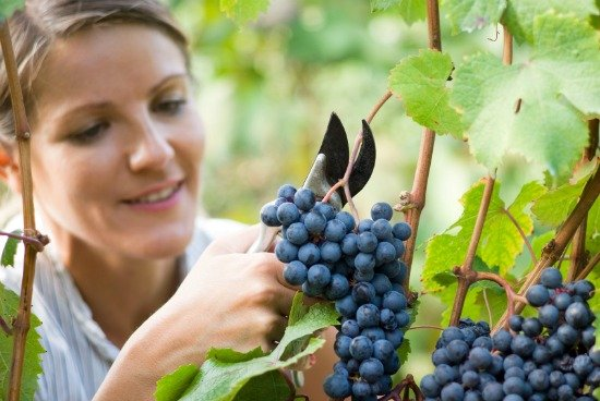 Parable of the vineyard worker